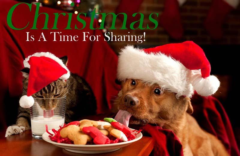 800-christmas-dog-cat-2013